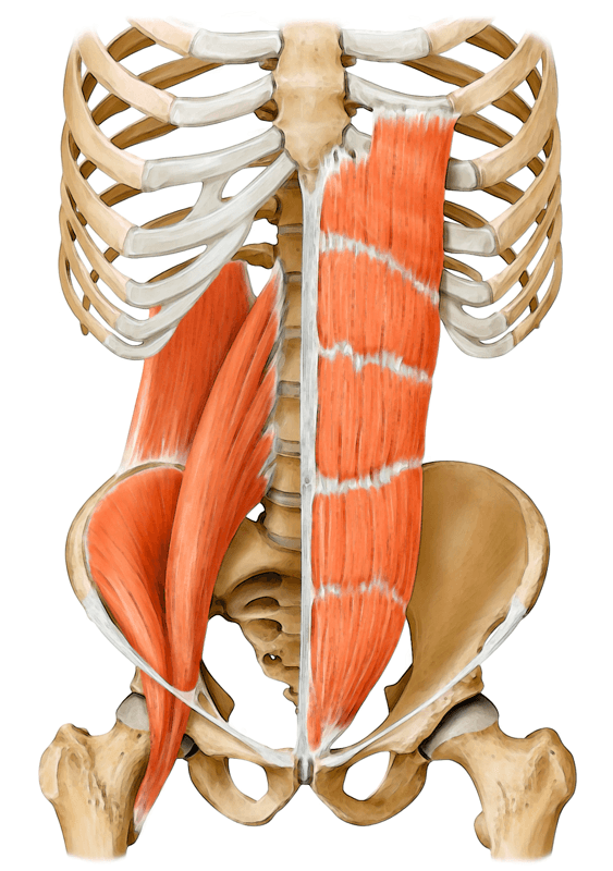 core muscles 2