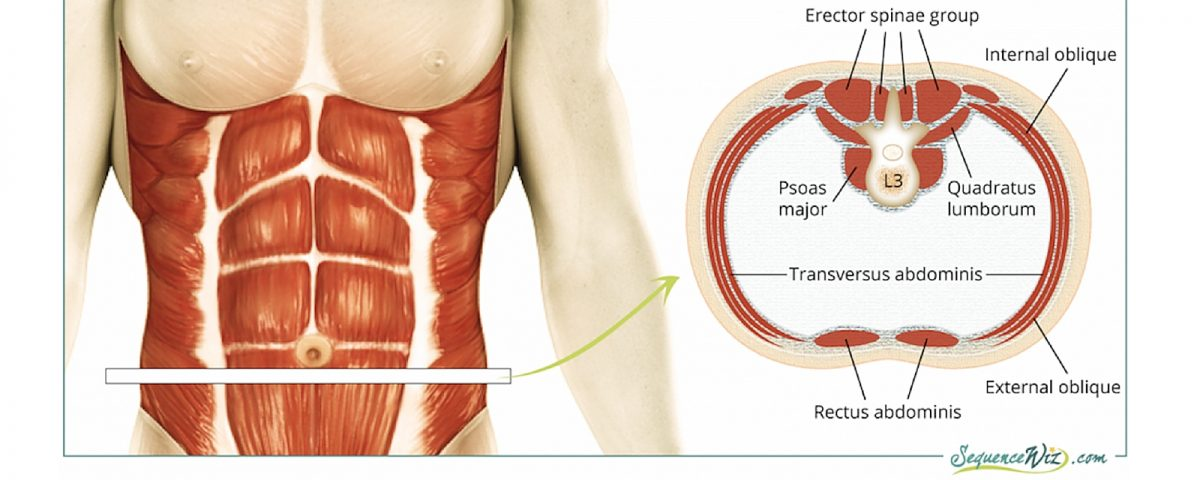 core muscles